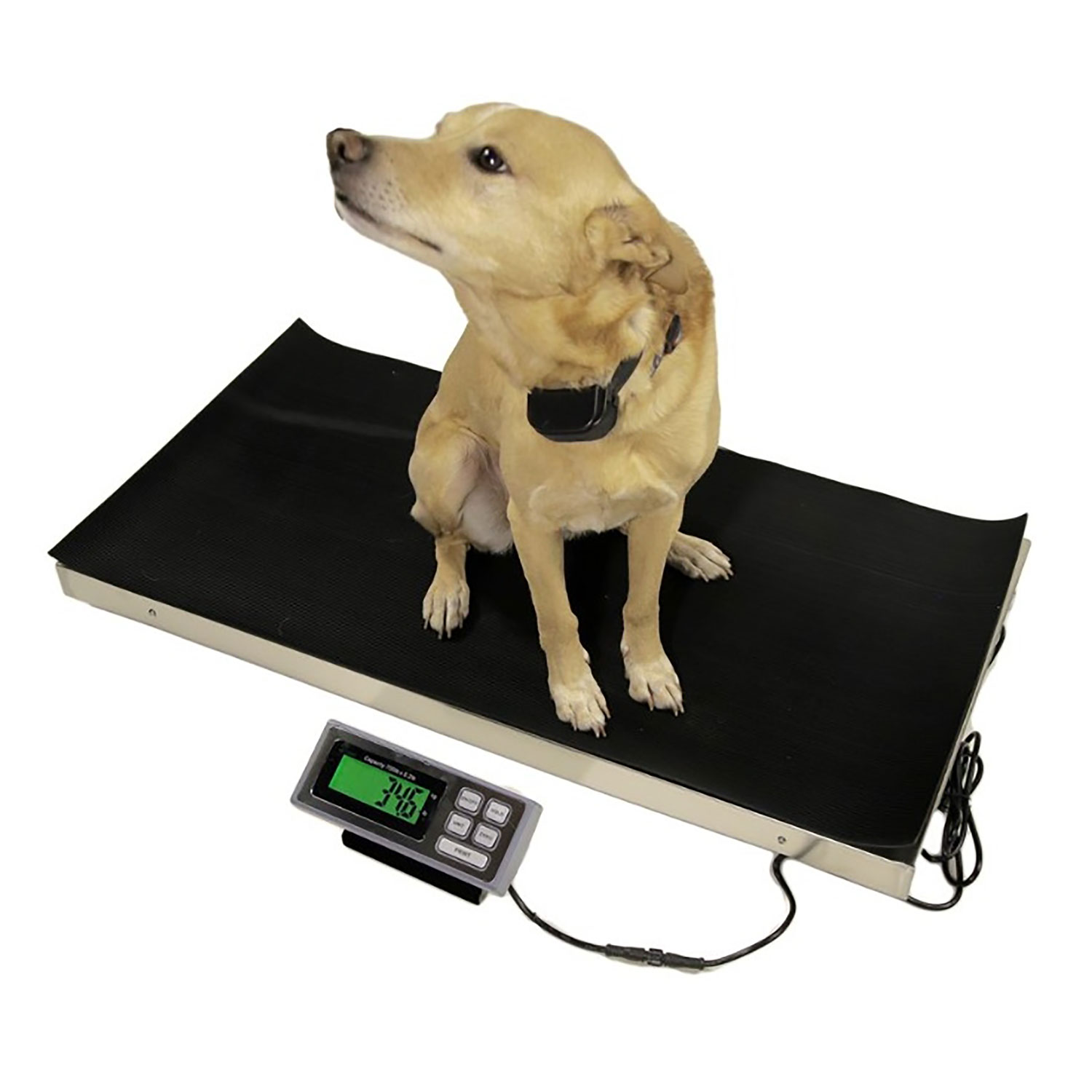 Large Veterinary Scale 700lb x 0.2lb Tree LVS-700 Livestock Pet